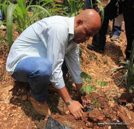 President Michel Martelly procedant a la mise en terre d'une plantule
